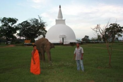 the wild elephant is a regular visitor of Somawathiya Stupa
